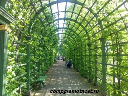 Арка зелени Летний сад СПб
